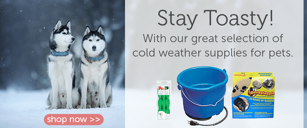 Cold Weather Supplies for Dogs