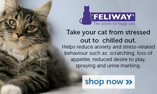 Help your cat go from stressed out to chilled out