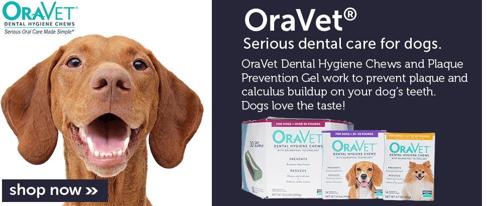 Oravet - Serious Dental Care