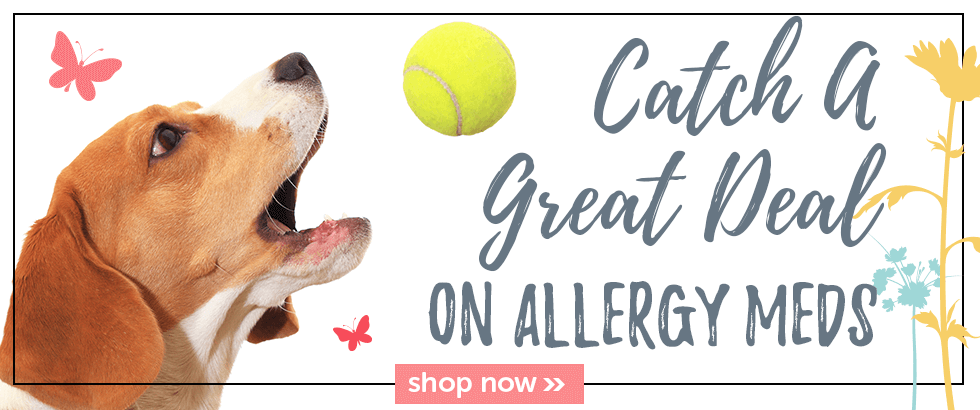 Take care of spring allergies at Pet Supplies 4 Less