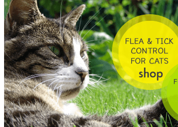 Flea & Tick Control for Cats