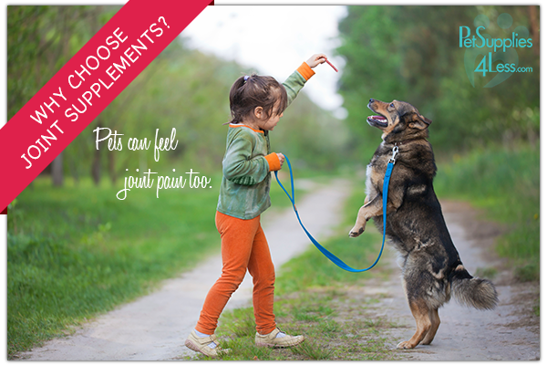 Why Choose joint supplements for your pet?